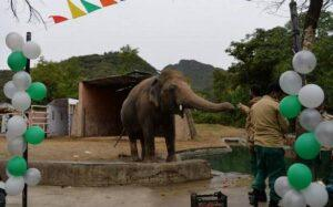 Pakistan's lonely jumbo packs trunk for Cambodia