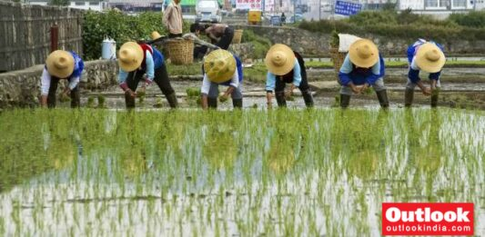 Seeds Are Semiconductor Microchips Of Agricultural Sector: China Daily