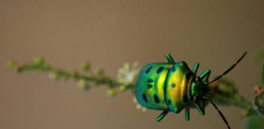 Watch   The world's insect population is declining