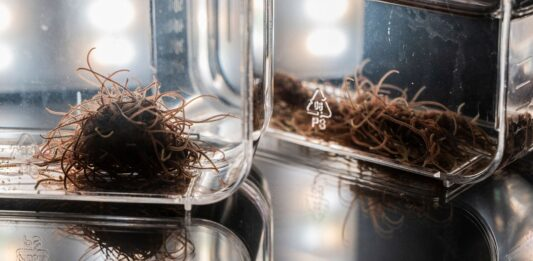 Researchers Are Studying These Worm Blobs to Build Robots
