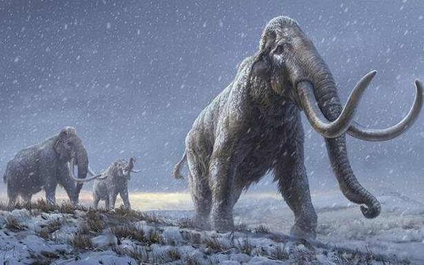 Teeth from Siberian mammoths yield oldest DNA ever recovered